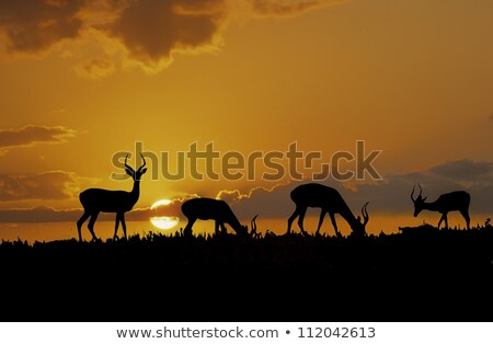 impala sunset silhouette stock photo © thp