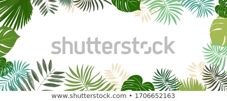 Tropical Frame With Frangipani Stock photo © barbaliss