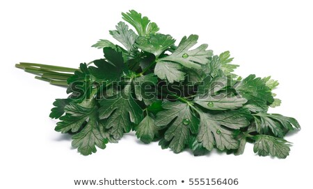 Bunch of flat-leaved parsley, paths Stock photo © maxsol7