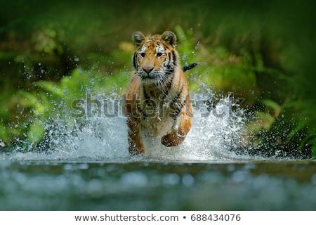 Animali stream illustrazione molti in giro cielo Foto d'archivio © colematt