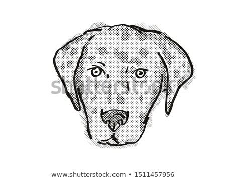 amerikaanse · hondenras · cartoon · retro · tekening · stijl - stockfoto © patrimonio