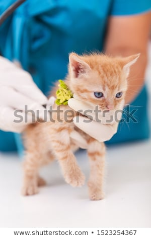 cute ginger kitten being examined at the veterinary doctor with stock photo © ilona75