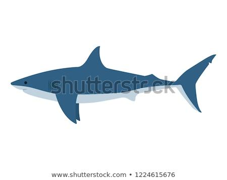 белый акула глубокий синий океана Сток-фото © leedsn