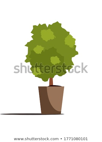 Tree and Plant with Leaves in Pot for Cafe Vector Stock photo © robuart