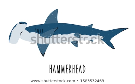 Hammerhead shark. Big dangerous marine predator. Underwater sea animal. Vector illustration of Marin Stock photo © designer_things