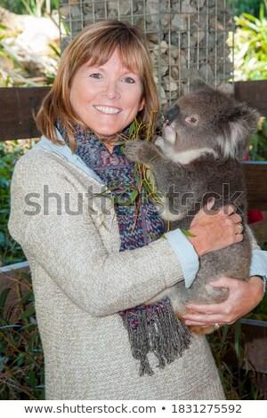 australiano · koala · árbol · goma - foto stock © mroz