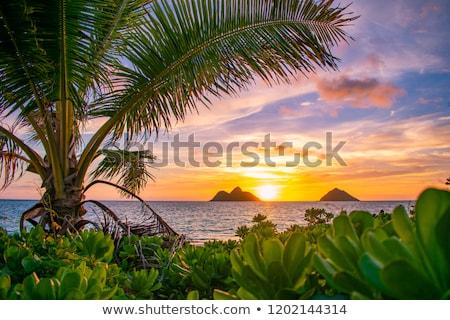 Turkus niebieski plaży morza piasku wakacje Zdjęcia stock © craig