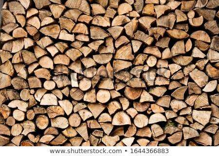 Posiekane drewno opałowe drzew drewna charakter martwych Zdjęcia stock © Paha_L