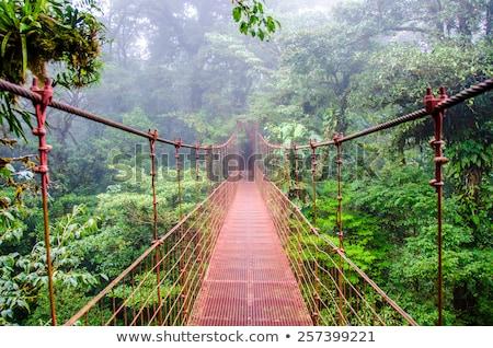 nube · forestales · tropicales · niebla · puesta · de · sol · árbol - foto stock © mtilghma