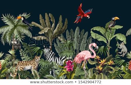Animals from safari / zoo Stock photo © orson