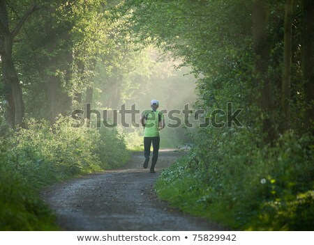 Countryside track in early morning sunlight Stock photo © suerob