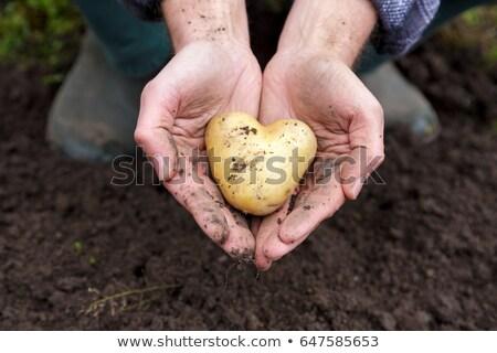 Amor batata naturalmente coração branco Foto stock © erierika