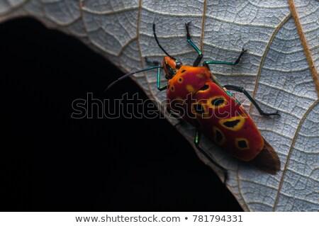 Oranje kever groene natuur tuin park Stockfoto © sweetcrisis