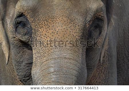 elefant · portret · vedere · plin · de · noroi · apa · potabila - imagine de stoc © smithore