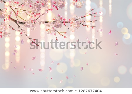 blooming plum flowers background stock photo © simply