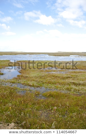 View at unique Slufter nature where salt water meets grass on island Texel, the Netherlands Stock photo © gigra