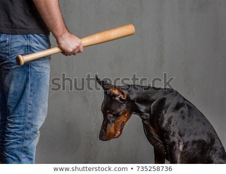 Stock photo: Animal Abuse