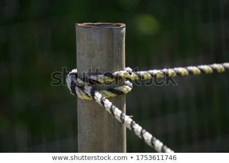Fence stake Stock photo © hraska