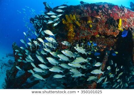 Tons of Fish Stock photo © ArenaCreative