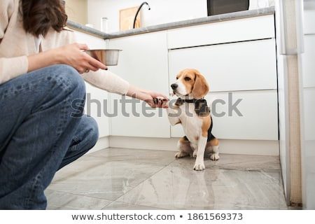 Beagle poot cute jonge puppy hond Stockfoto © ArenaCreative