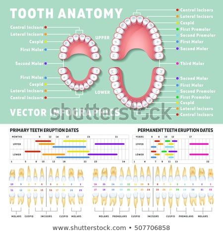 Сток-фото: зубов · анатомии · жизненно · важный · структуры · кость · синий