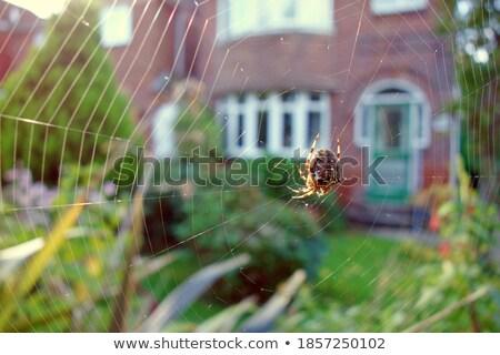 ビッグ オーブ クモ 葉 ブラウン ストックフォト © jarin13