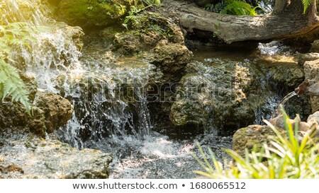 kicsi · mocsár · perem · tavasz · zöld · legelő - stock fotó © mikko