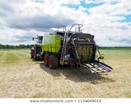 new harvest before pickup into combine Stock photo © mycola
