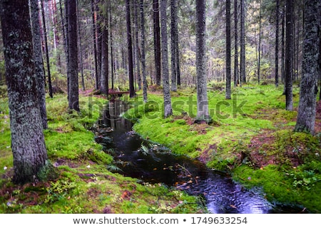 Footpath in the forest Stock photo © photosebia