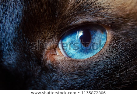 calm cat eye macro stock photo © songbird