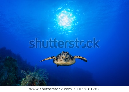 korall · hal · Vörös-tenger · Egyiptom · elöl · pillangó - stock fotó © thomaseder