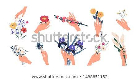 mãos · flores · mãe · filho · roxo · amor - foto stock © danielbarquero
