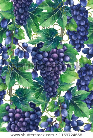 Uva abstrato roxo uvas verdes isolado Foto stock © boroda