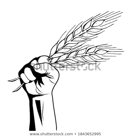 Black silhouette of spikelet of wheat isolated on white backgrou Stock photo © smeagorl