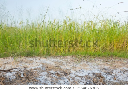 Saline soil Stock photo © Nneirda