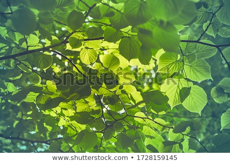 Stockfoto: Boom · groene · bladeren · vorm · menselijke · hoofd · bomen