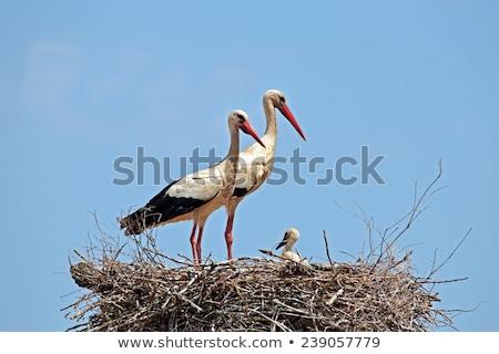 nest · paal · bewolkt · hemel · verkrachting · veld - stockfoto © stevanovicigor