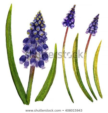 цветы · синий · серый · bokeh · Пасху · цветок - Сток-фото © haraldmuc