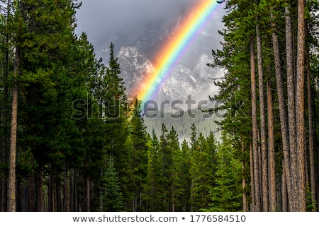 rainbow and forest landscape stock photo © juhku