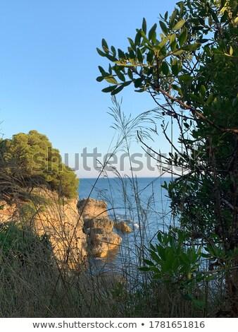 Verde colinas pradera flores silvestres Montenegro Foto stock © master1305