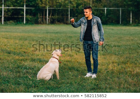 man training dog at sunset Stock photo © adrenalina
