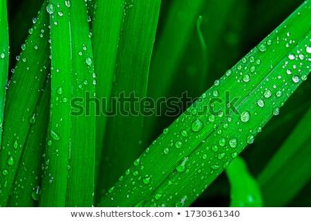 Gocce di pioggia lungo foglia shore impianto drop Foto d'archivio © Mps197