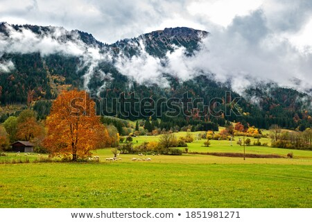 autumn landscape at pfronten stock photo © dirkr