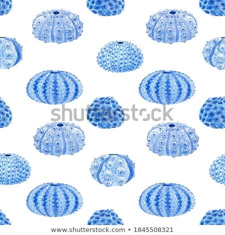 морем губки коралловые акварель бесшовный орнамент Сток-фото © Mamziolzi