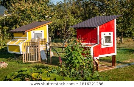 wooden chicken coop Stock photo © Peredniankina