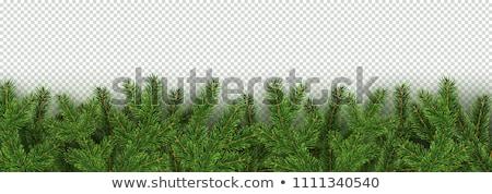 Karácsony friss örökzöld fa ágak fekete Stock fotó © neirfy