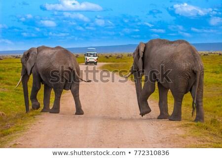 elephantt crossing dirt roadi in amboseli kenya stock photo © kasto