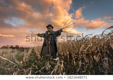 Scarecrow standing in corn field Stock photo © bluering