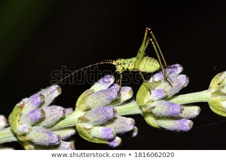 Nature design with bush and bug Stock photo © bluering