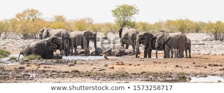 african elephant taking a mud bath stock photo © simoneeman